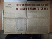 """Информационный плакат """"Гиподерматоз крупного рогатого скота"""" 1987 г."""